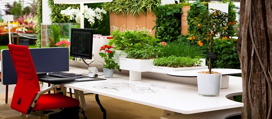 Creating a Greener Office Environment